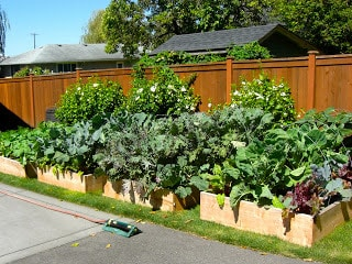 Raised Beds and False Economies