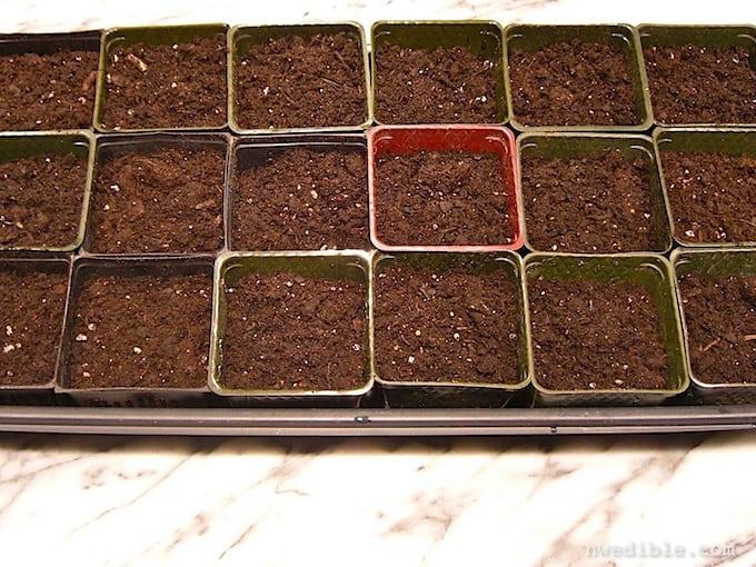 Seed Starting 101-4