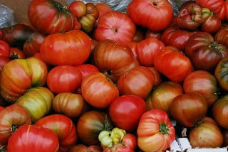 Heat Lovers in A Cool Clime: Tomato Dreams and Tomato Delusions