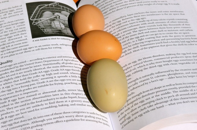 What's In A Name? The Beyond Organic Backyard Egg Question