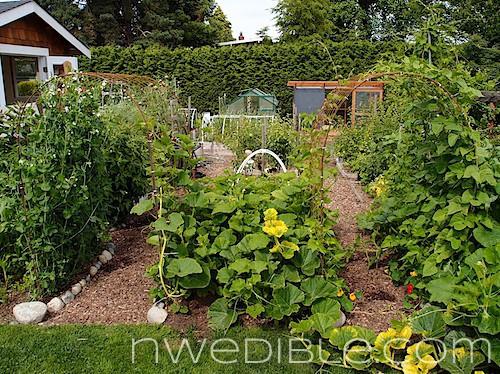 The Garden In June: Photo Tour