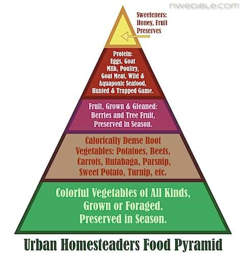 food pyramid essays