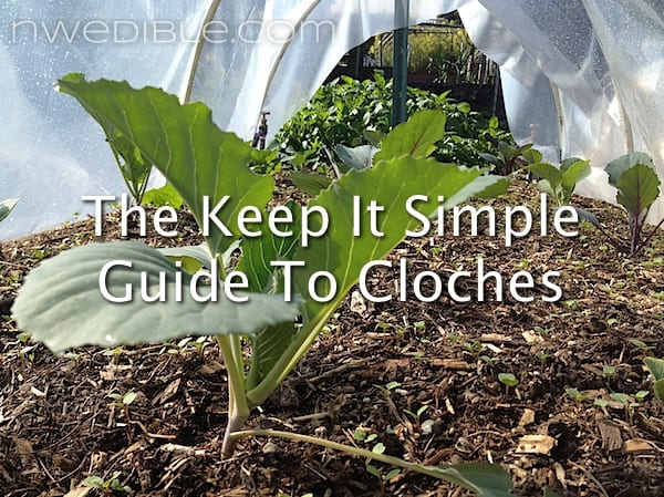 The Keep It Simple Guide To Cloches