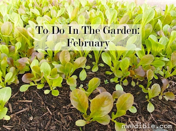 To Do In The NW Edible Garden: February 2014