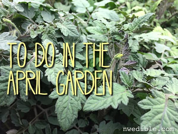 To Do In The Northwest Edible Garden: April 2014