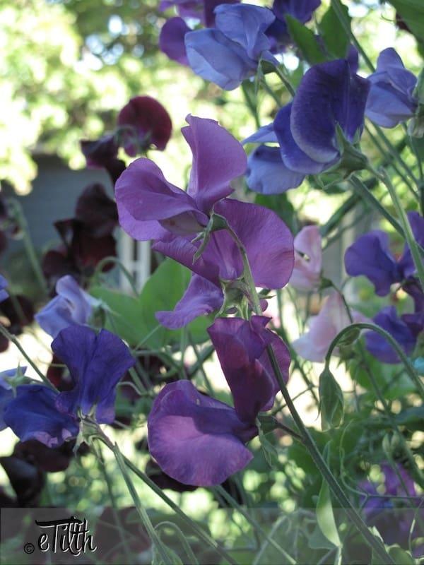 Best Veg For Small Gardens