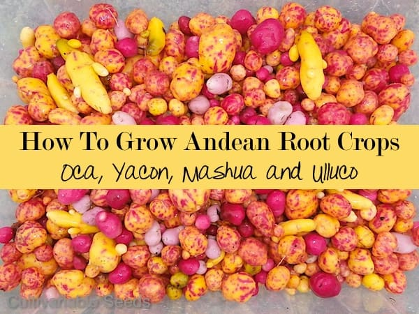 How To Grow Andean Root Crops