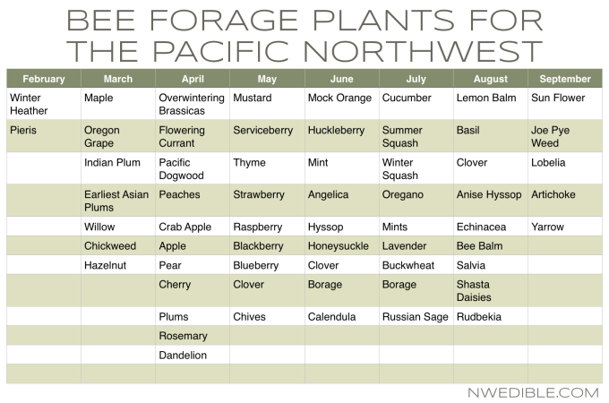 Bee Friendly Gardening In The Pacific Northwest