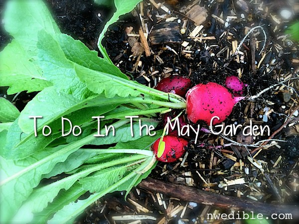 To Do In The Northwest Edible Garden: May 2014