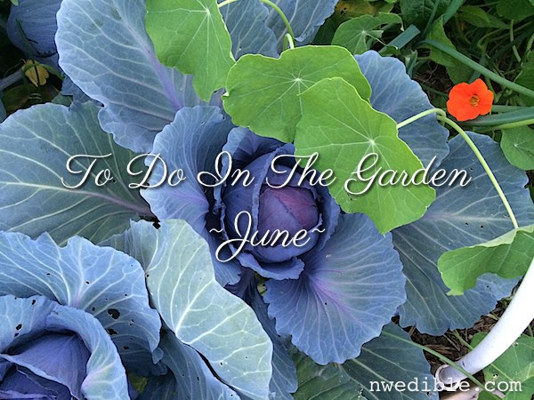 June 2014 Gardening Chores For The Pacific Northwest