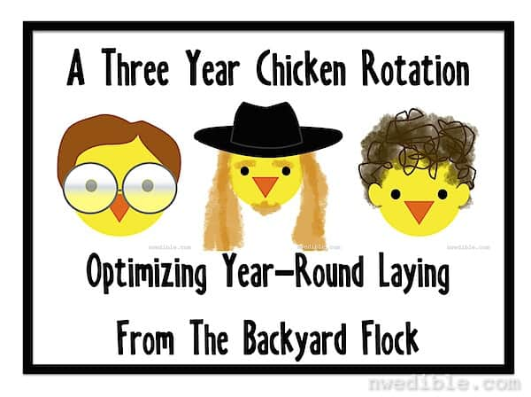 Chicken Rotation: Optimizing For Year-Round Laying From The Backyard Flock