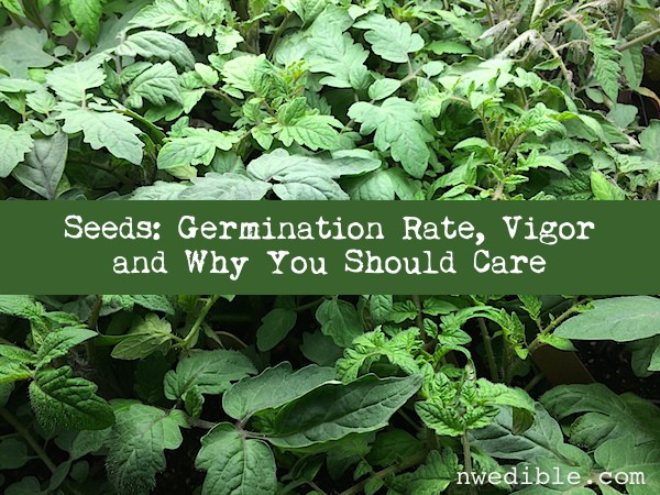 Is Cheap Seed Hurting Your Garden? Germination Rate, Vigor, and Why You Should Care