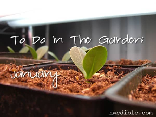 To Do In The Northwest Edible Garden: January 2015