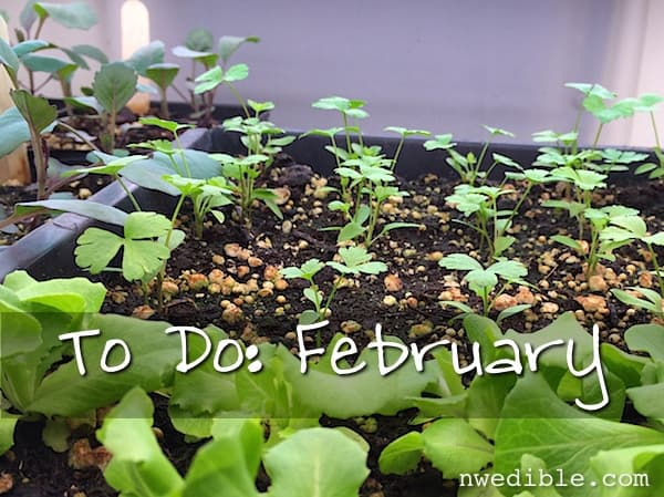 To Do In The Northwest Edible Garden: February 2015