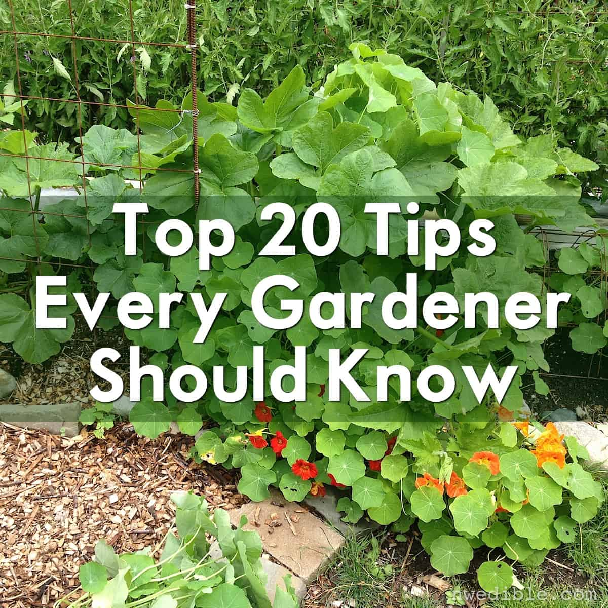 Top 20 Tips Every Gardener Should Know