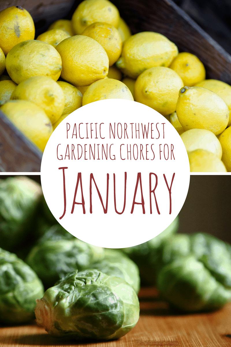 1-January-Garden-Chores