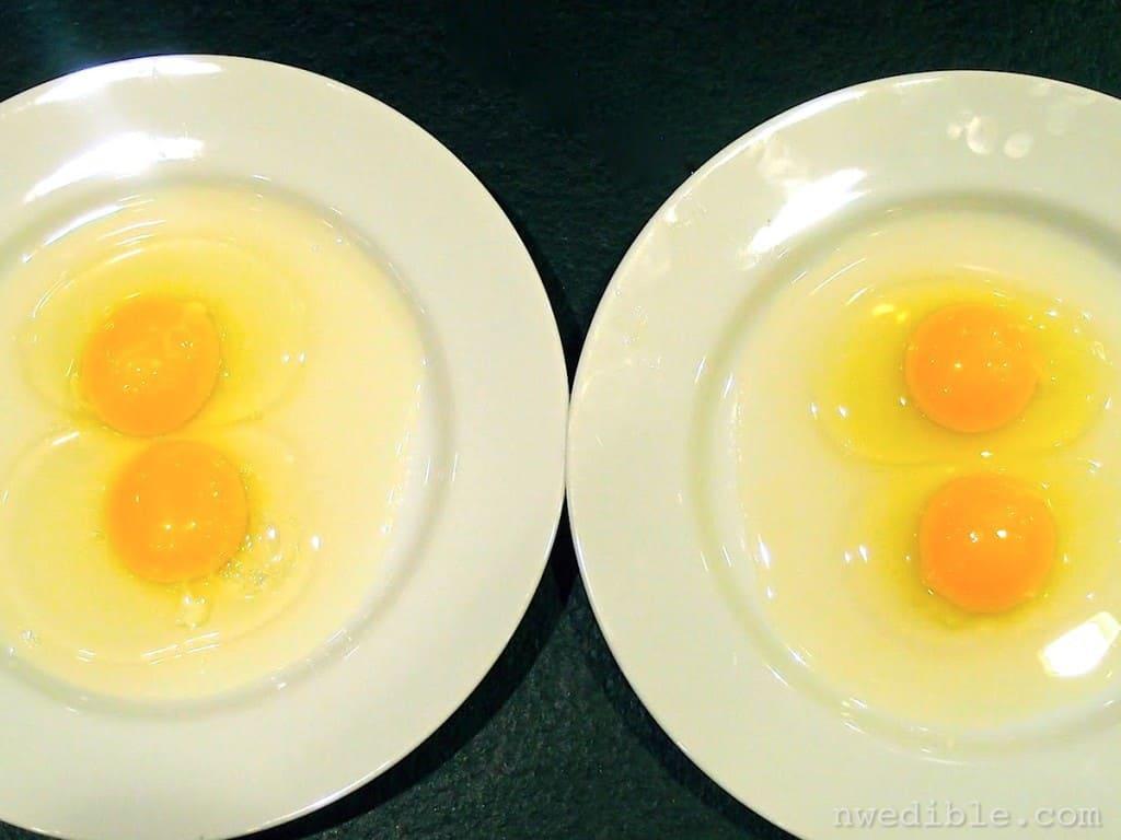 Backyard vs Store Eggs11
