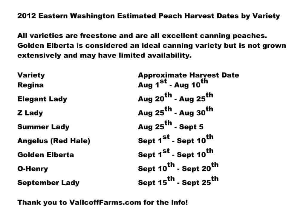 Peach Ripening Eastern Washington