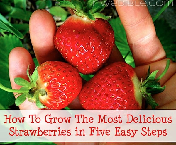 Super Delicious Strawberries In Five Easy Steps