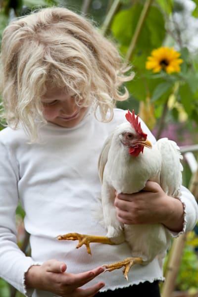 Erica Strauss 's daughter Bella, 7, loves having chickens.