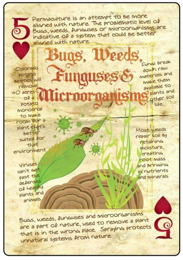 bugs-weeds