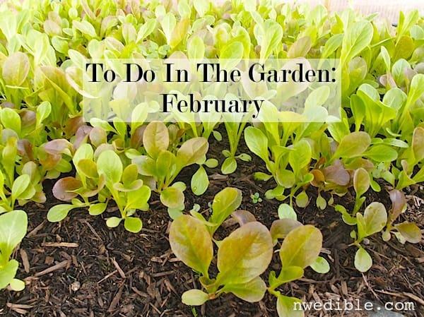 To Do February