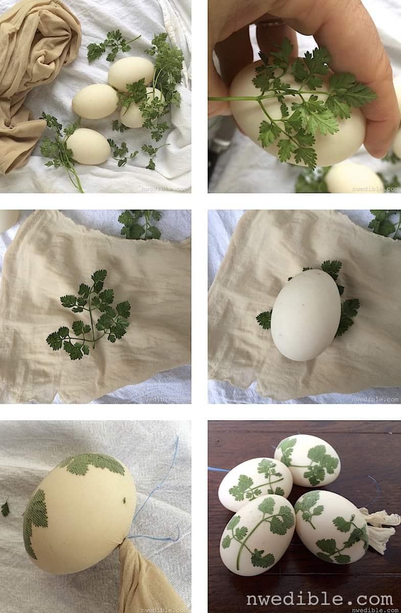 Sunprint-Dyed-Eggs-Method