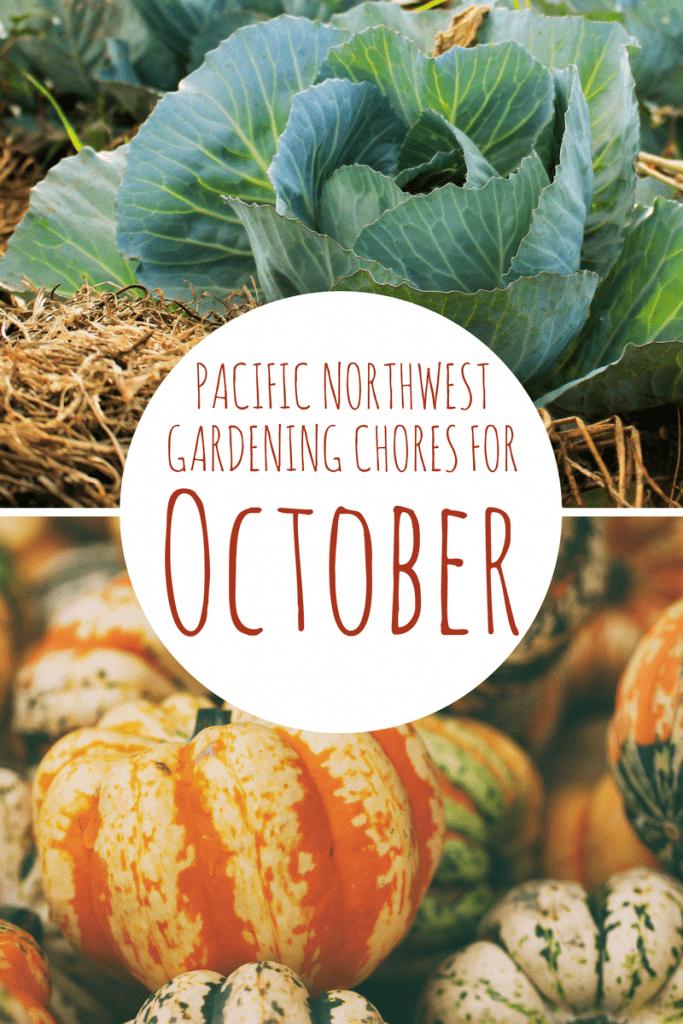 10 October Garden Chores
