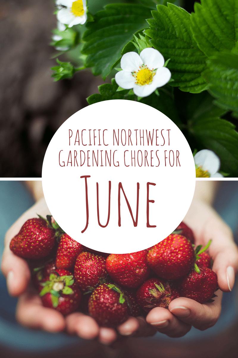 6 June Garden Chores