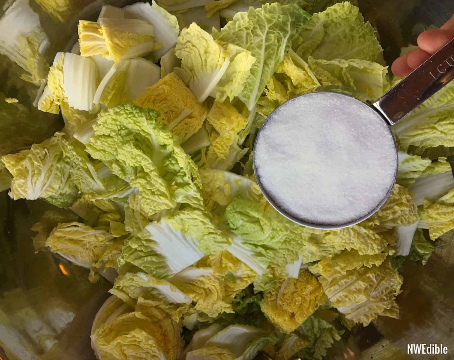 Pre Salting Kimchi Ferment