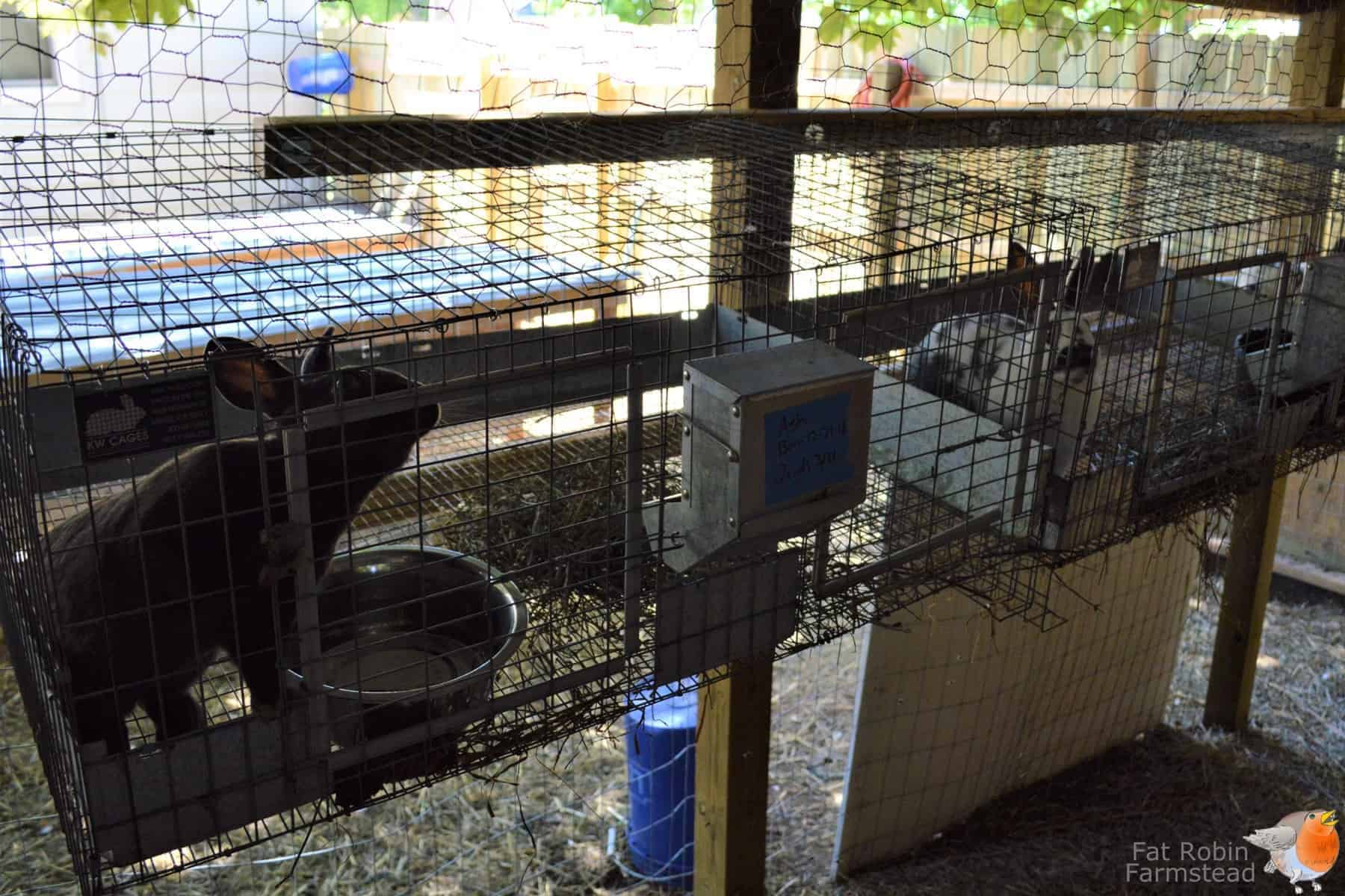 Rabbit Keeping Cages picture of some hanging cages